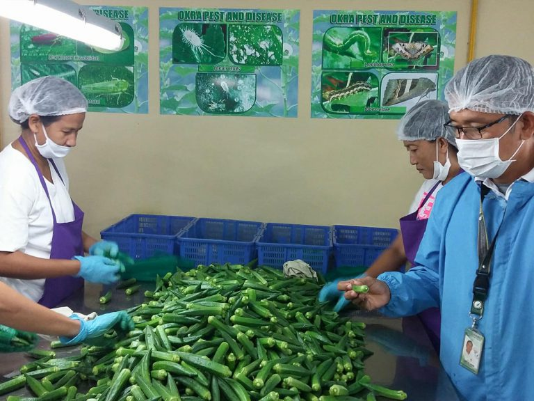 Export Inspection of Fresh Okra to Japan